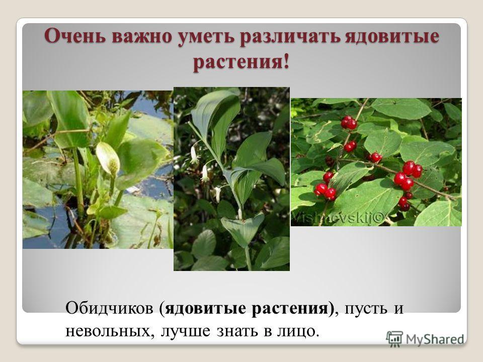 Очень важно уметь различать ядовитые растения! Обидчиков (ядовитые растения), пусть и невольных, лучше знать в лицо.