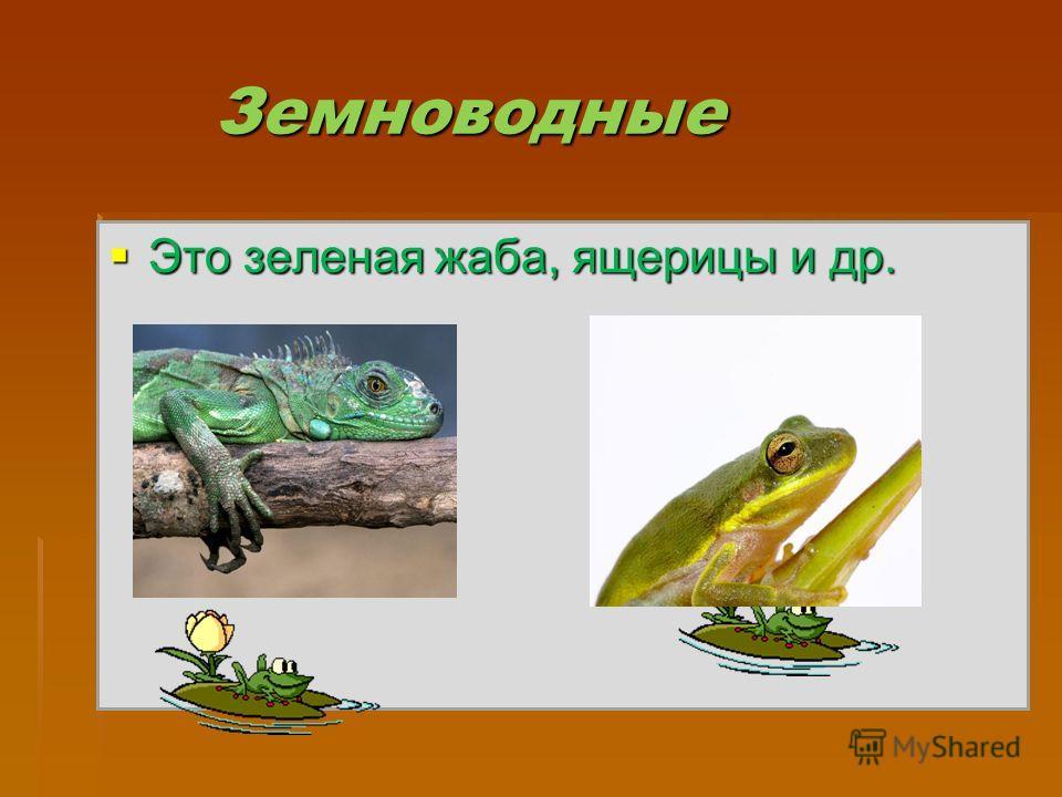 Земноводные Земноводные Это зеленая жаба, ящерицы и др. Это зеленая жаба, ящерицы и др.