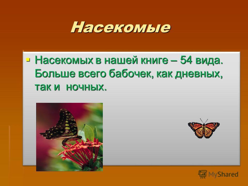 Насекомые Насекомых в нашей книге – 54 вида. Больше всего бабочек, как дневных, так и ночных. Насекомых в нашей книге – 54 вида. Больше всего бабочек, как дневных, так и ночных.
