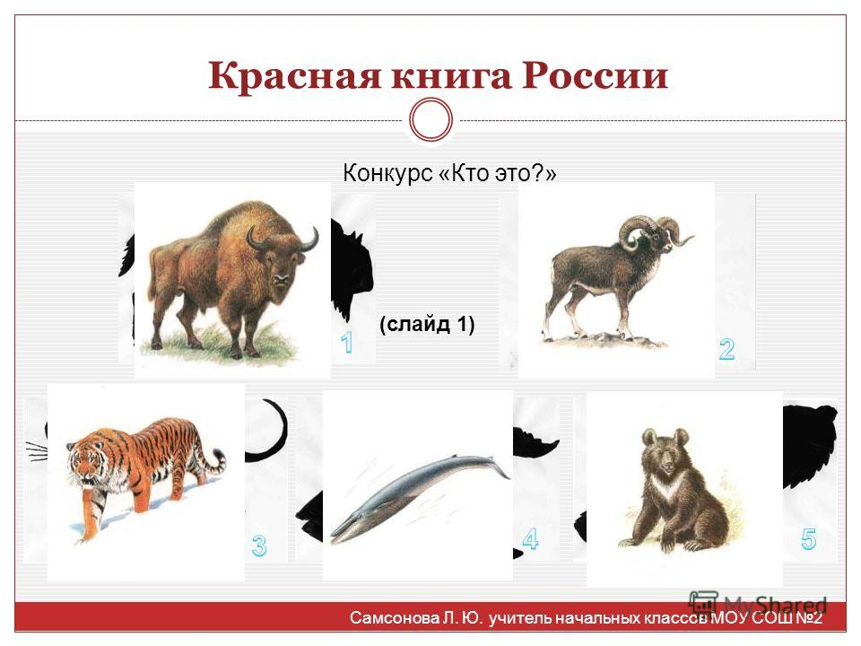Красная книга России Конкурс «Кто это?» (слайд 1) Самсонова Л. Ю. учитель начальных классов МОУ СОШ 2