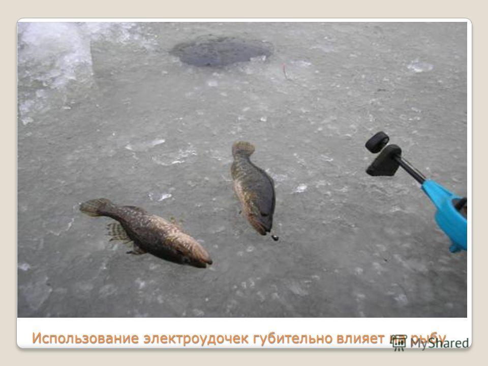 Использование электроудочек губительно влияет на рыбу