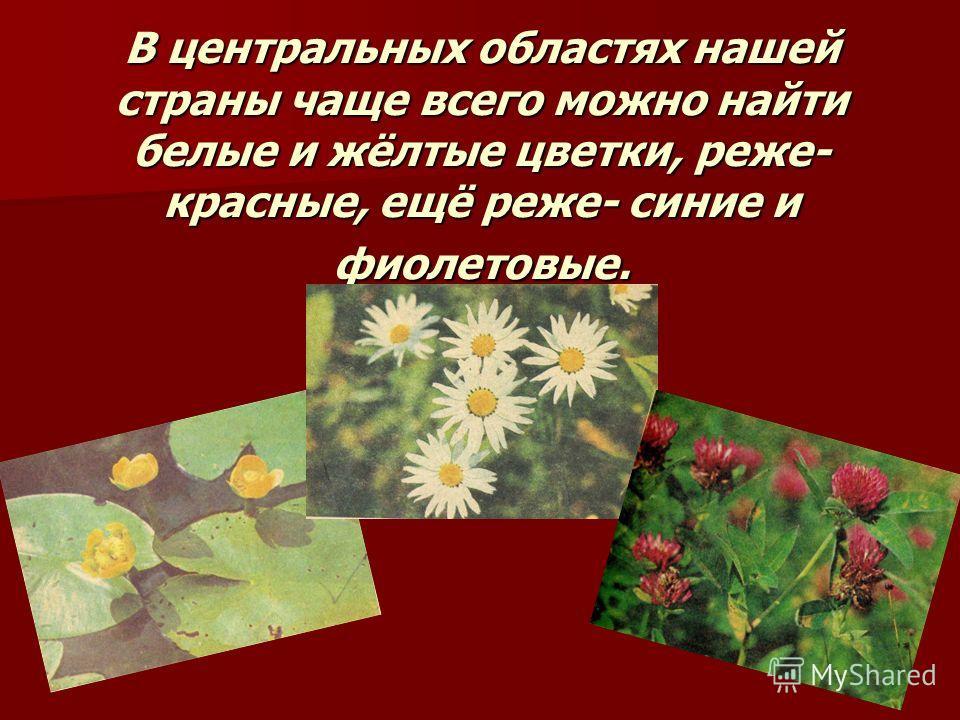 В центральных областях нашей страны чаще всего можно найти белые и жёлтые цветки, реже- красные, ещё реже- синие и фиолетовые.