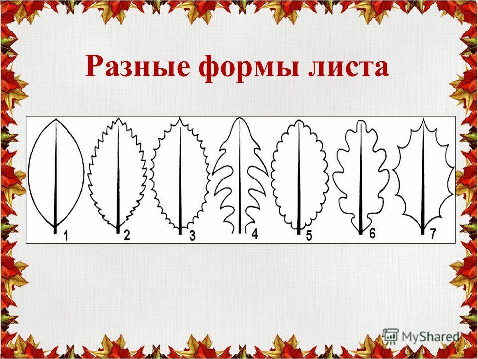 Разные формы листа