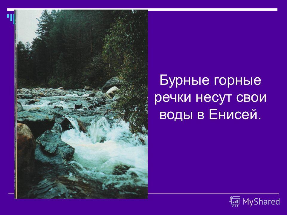 Бурные горные речки несут свои воды в Енисей.