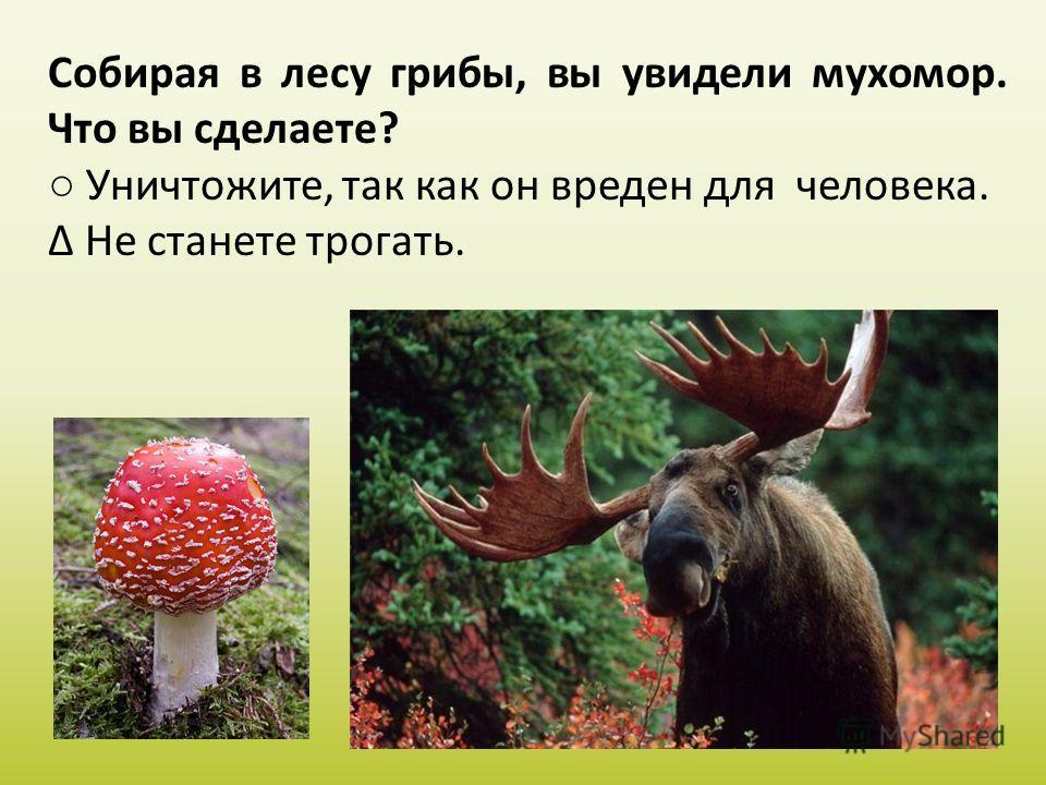 Собирая в лесу грибы, вы увидели мухомор. Что вы сделаете? Уничтожите, так как он вреден для человека. Не станете трогать.
