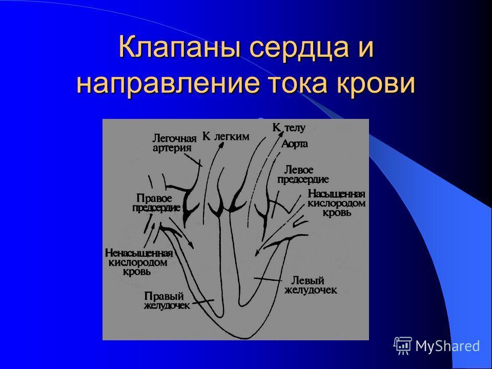 Клапаны сердца и направление тока крови.