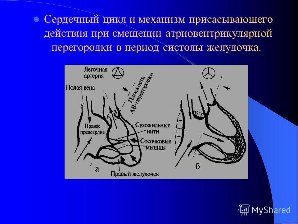 Сердечный цикл и механизм присасывающего действия при смещении атриовентрикулярной перегородки в период систолы желудочка.