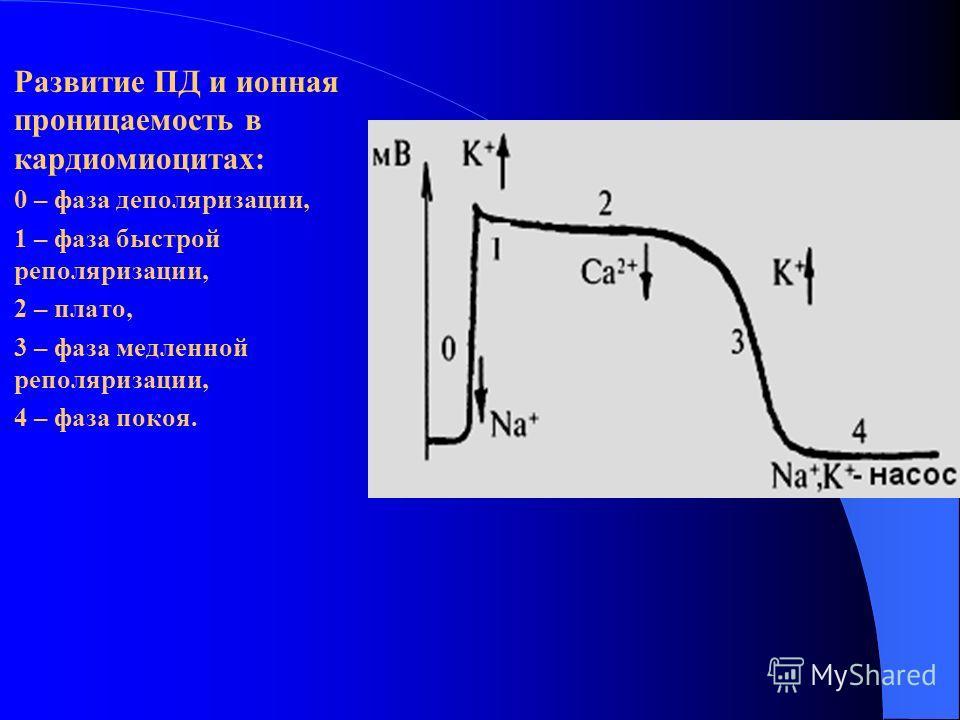 Развитие ПД и ионная проницаемость в кардиомиоцитах: 0 – фаза деполяризации, 1 – фаза быстрой реполяризации, 2 – плато, 3 – фаза медленной реполяризации, 4 – фаза покоя.