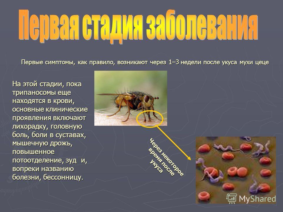 Первые симптомы, как правило, возникают через 1–3 недели после укуса мухи цеце На этой стадии, пока трипаносомы еще находятся в крови, основные клинические проявления включают лихорадку, головную боль, боли в суставах, мышечную дрожь, повышенное пото