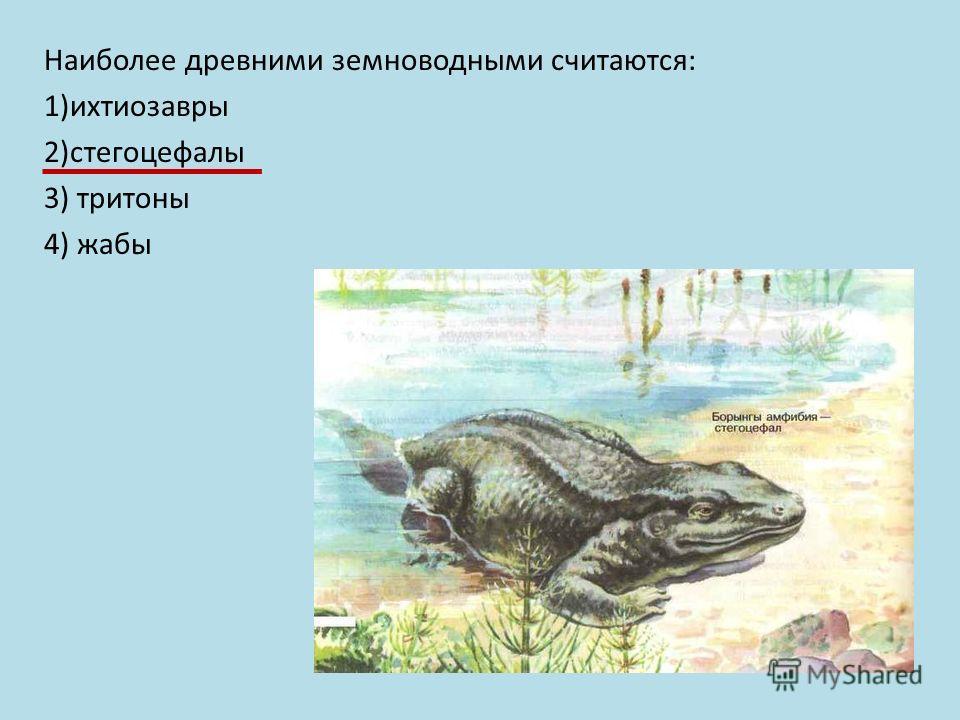 Наиболее древними земноводными считаются: 1)ихтиозавры 2)стегоцефалы 3) тритоны 4) жабы