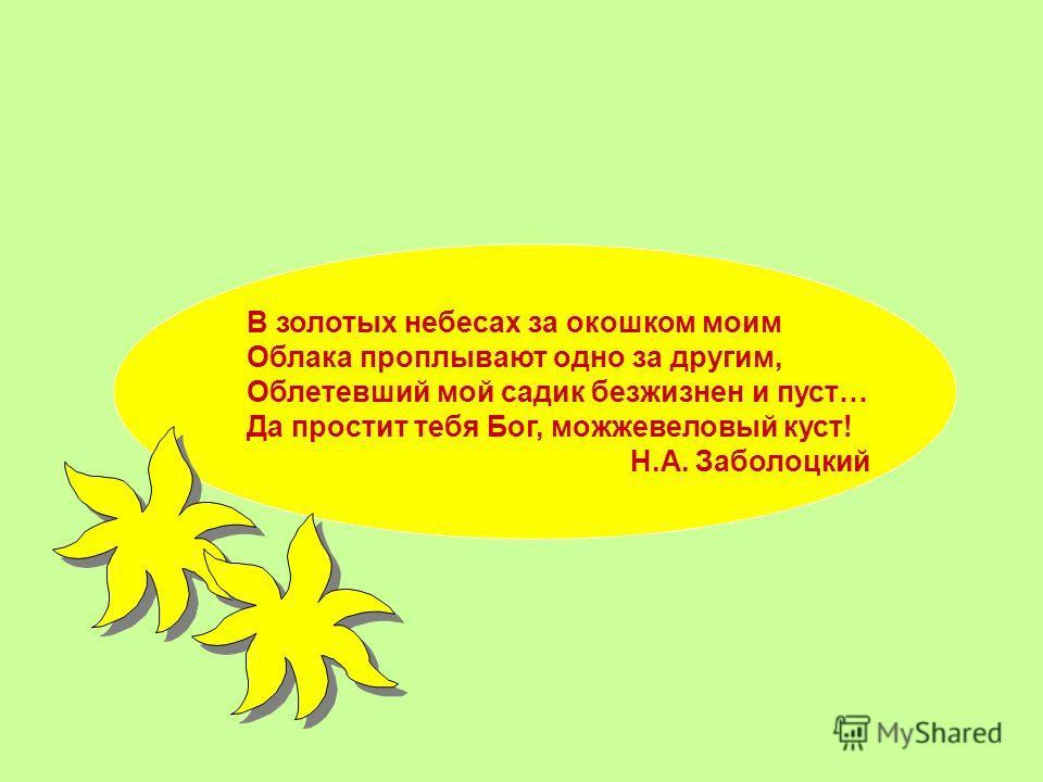 В золотых небесах за окошком моим Ооблака проплывают одно за другим, Ооблетевший мой садик безжизнен и пуст… Да простит тебя Бог, можжевеловый куст! Н.А. Заболоцкий