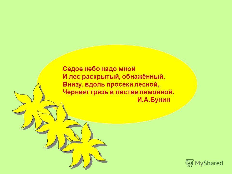 Седое небо надо мной И лес раскрытый, обнажэный. Внизу, вдоль просеки лесной, Чернеет грязь в листве лимоной. И.А.Бунин