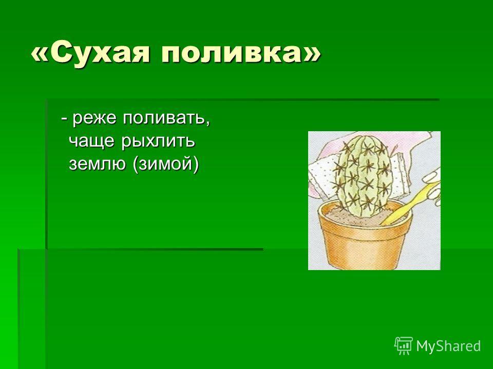 «Сухая поливка» - реже поливать, чаще рыхлить землю (зимой) - реже поливать, чаще рыхлить землю (зимой)