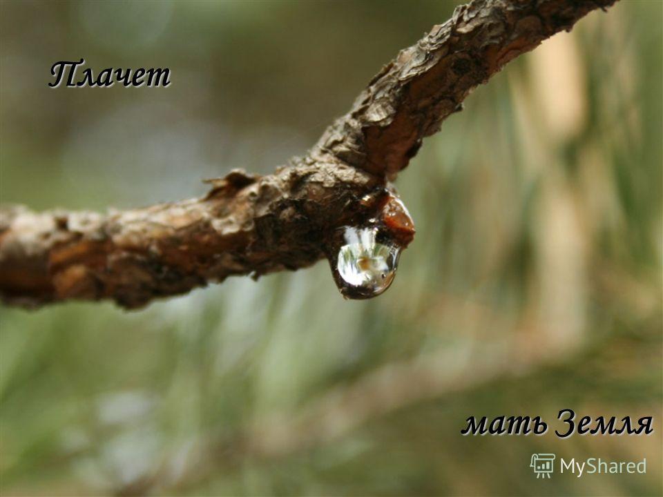 Плачет мать Земля