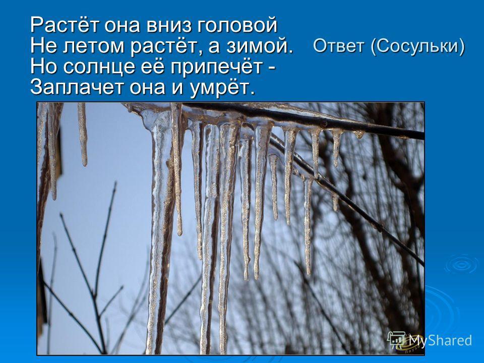 Ответ (Сосульки) Растёт она вниз головой Не летом растёт, а зимой. Но солнце её припечёт - Заплачет она и умрёт.