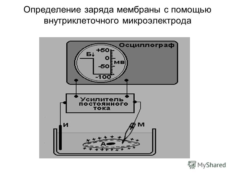 Определение заряда мембраны с помощью внутриклеточного микроэлектрода