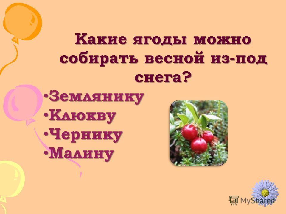 Какие ягоды можно собирать весной из-под снега? Землянику Землянику Клюкву Клюкву Чернику Чернику Малину Малину