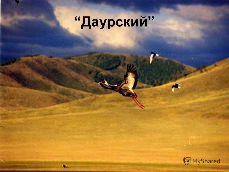 Даурский