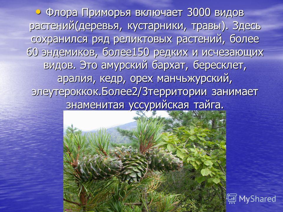 Флора Приморья включает 3000 видов растений(деревья, кустарники, травы). Здесь сохранился ряд реликтовых растений, более 60 эндемиков, более 150 редких и исчезающих видов. Это амурский бархат, бересклет, аралия, кедр, орех манчьжурский, элеутерококк.