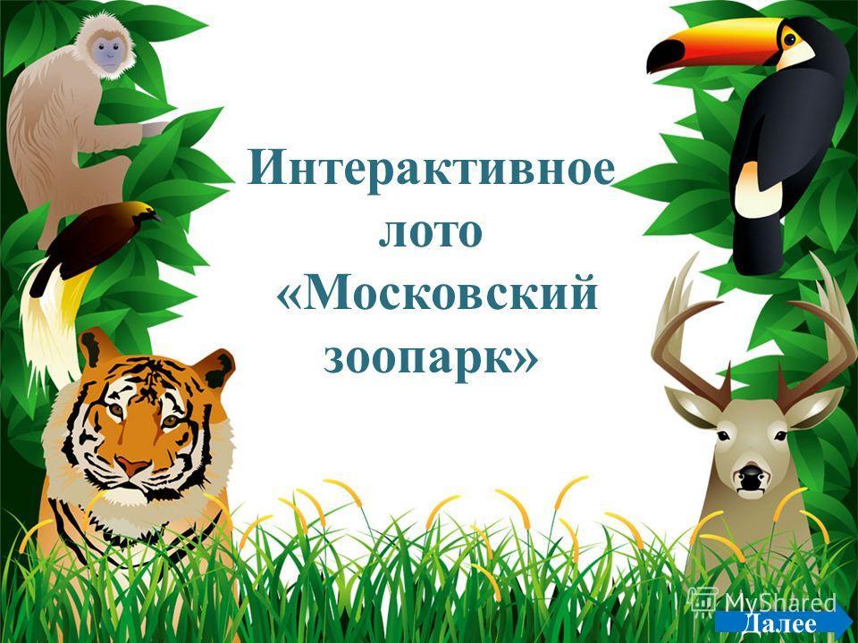 ProPowerPoint.ru Далее Интерактивное лото «Московский зоопарк»