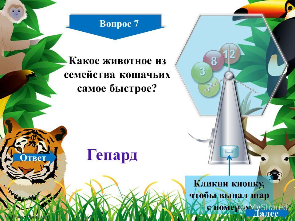 ProPowerPoint.ru 7 11 12 8 7 3 Кликни кнопку, чтобы выпал шар с номером Вопрос 7 Далее Какое животное из семейства кошачьих самое быстрое? Гепард Ответ