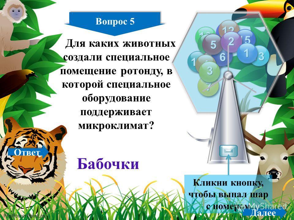ProPowerPoint.ru Вопрос 5 10 5 11 12 13 14 15 9 8 7 6 5 4 3 2 1 Кликни кнопку, чтобы выпал шар с номером Далее Бабочки Для каких животных создали специальное помещение ротонду, в которой специальное оборудование поддерживает микроклимат? Ответ