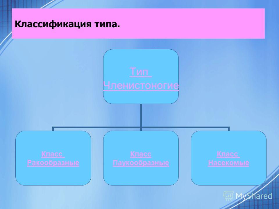 Классификация типа. Тип Членистоногие Класс Ракообразные Класс Паукообразные Класс Насекомые
