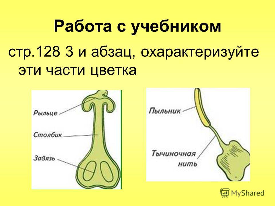 Работа с учебником стр.128 3 и абзац, охарактеризуйте эти части цветка