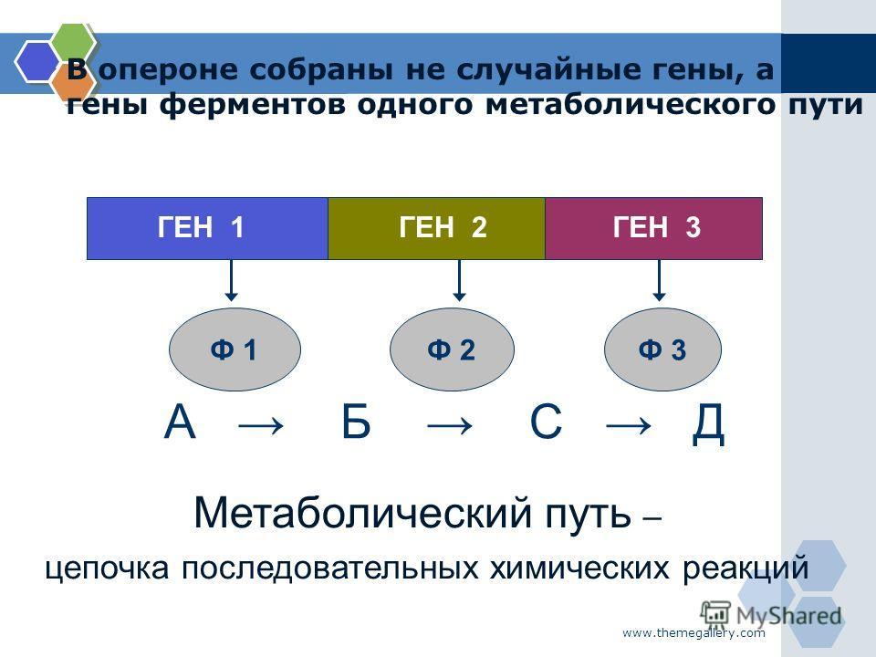 www.themegallery.com В опероне собраны не случайные гены, а гены ферментов одного метаболического пути А Б С Д ГЕН 1ГЕН 2ГЕН 3 Ф 1Ф 2Ф 3 Метаболический путь – цепочка последовательных химических реакций