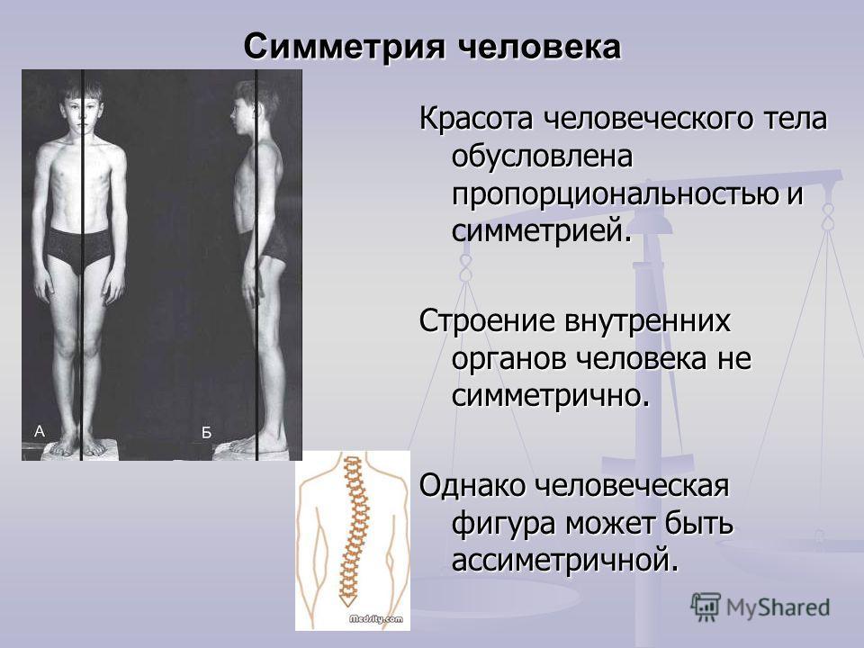 Симметрия человека Красота человеческого тела обусловлена пропорциональностью и. Красота человеческого тела обусловлена пропорциональностью и симметрией. Строение внутренних органов человека не симметрично. Однако человеческая фигура может быть ассим
