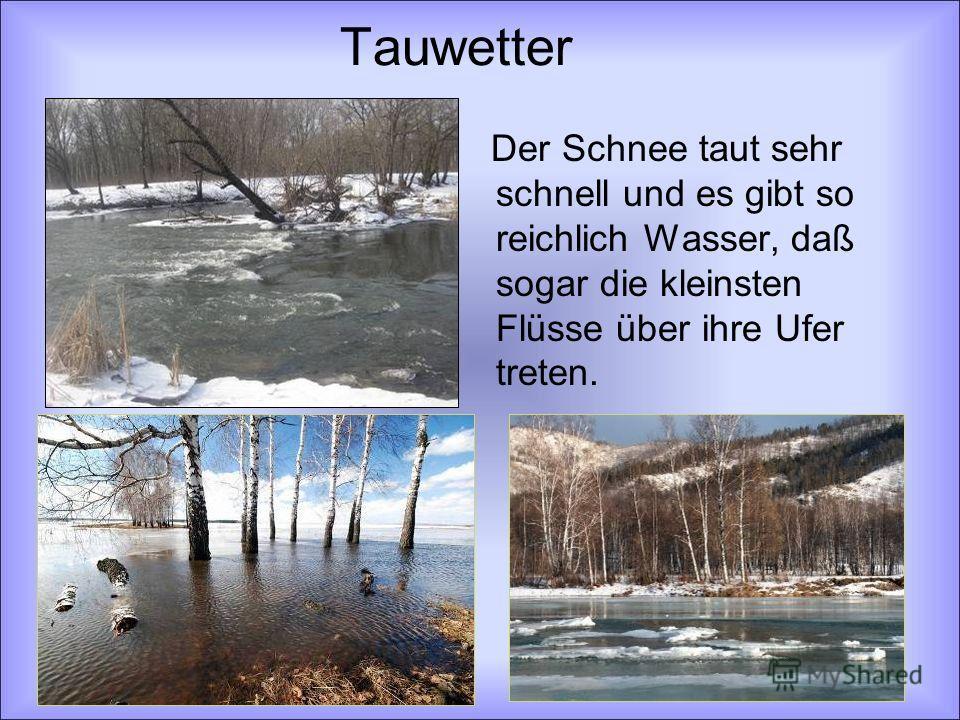 Tauwetter Der Schnee taut sehr schnell und es gibt so reichlich Wasser, daß sogar die kleinsten Flüsse über ihre Ufer treten.