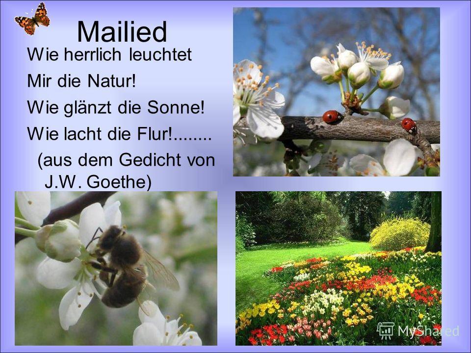 Mailied Wie herrlich leuchtet Mir die Natur! Wie glänzt die Sonne! Wie lacht die Flur!........ (aus dem Gedicht von J.W. Goethe)