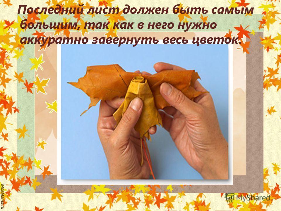Последний лист должен быть самым большим, так как в него нужно аккуратно завернуть весь цветок.