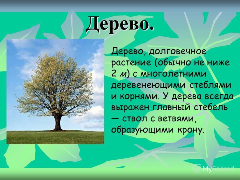 Рассмотрите картинки и подумайте, что здесь лишнее Как все эти растения можно назвать одним словом? Деревья