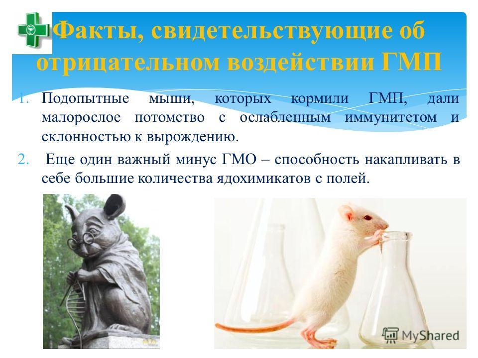 Факты, свидетельствующие об отрицательном воздействии ГМП 1. Подопытные мыши, которых кормили ГМП, дали малорослое потомство с ослабленным иммунитетом и склонностью к вырождению. 2. Еще один важный минус ГМО – способность накапливать в себе большие к