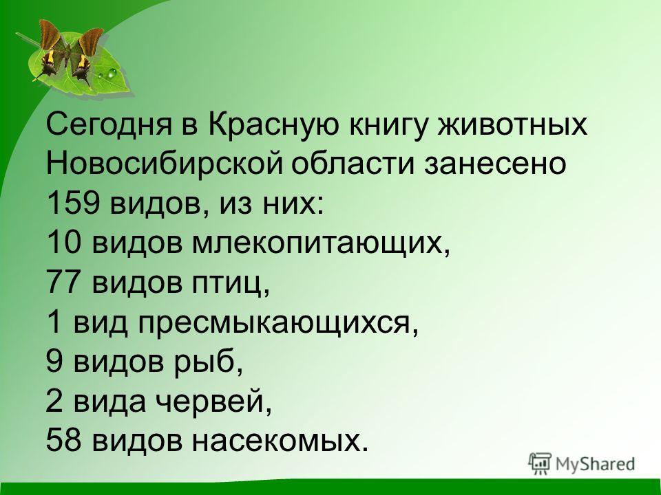 Сегодня в Красную книгу животных Новосибирской области занесено 159 видов, из них: 10 видов млекопитающих, 77 видов птиц, 1 вид пресмыкающихся, 9 видов рыб, 2 вида червей, 58 видов насекомых.