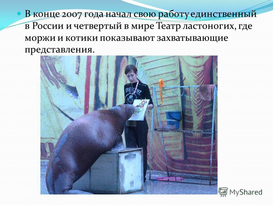 В конце 2007 года начал свою работу единственный в России и четвертый в мире Театр ластоногих, где моржи и котики показывают захватывающие представления.