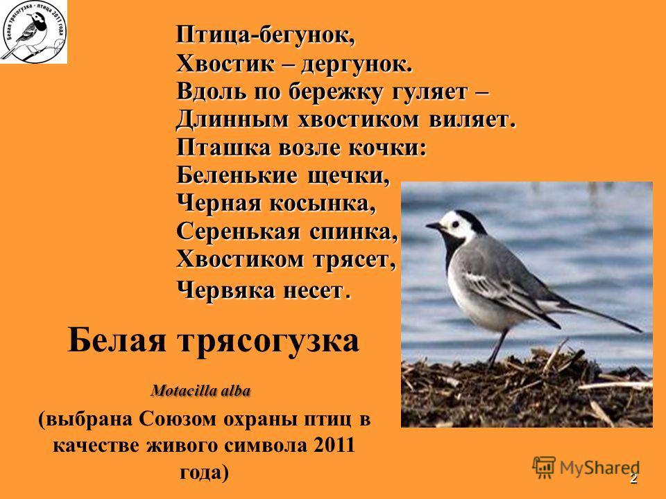 2 Птица-бегунок, Хвостик – дергунов. Вдоль по бережку гуляет – Длинным хвостиком виляет. Пташка возле кочки: Беленькие щечки, Черная косынка, Серенькая спинка, Хвостиком трясет, Червяка несет. Птица-бегунок, Хвостик – дергунов. Вдоль по бережку гуляе