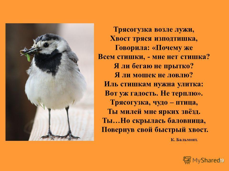 29 Трясогузка возле лужи, Хвост тряся исподтишка, Говорила: «Почему же Всем стишки, - мне нет стишка? Я ли бегаю не прытко? Я ли мошек не ловлю? Иль стишкам нужна улитка: Вот уж гадость. Не терплю». Трясогузка, чудо – птица, Ты милей мне ярких звёзд.