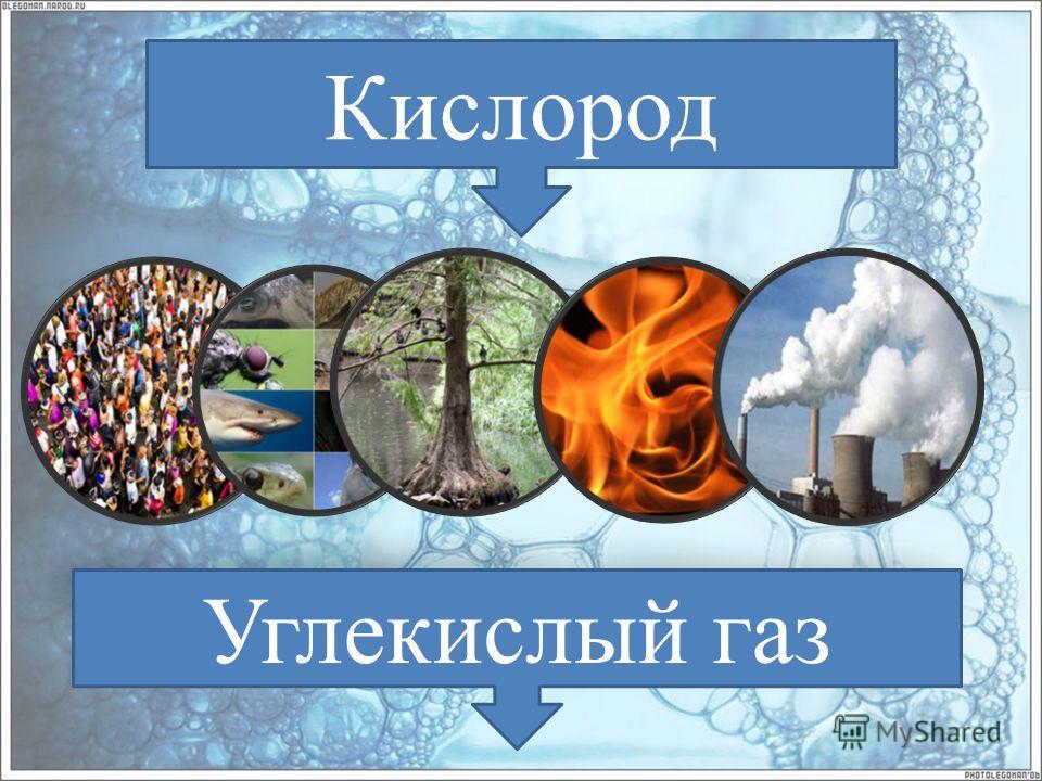 Кислород Углекислый газ