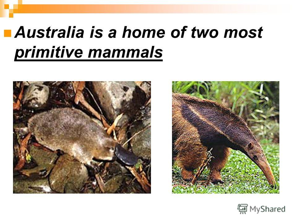 Australia is a home of two most primitive mammals