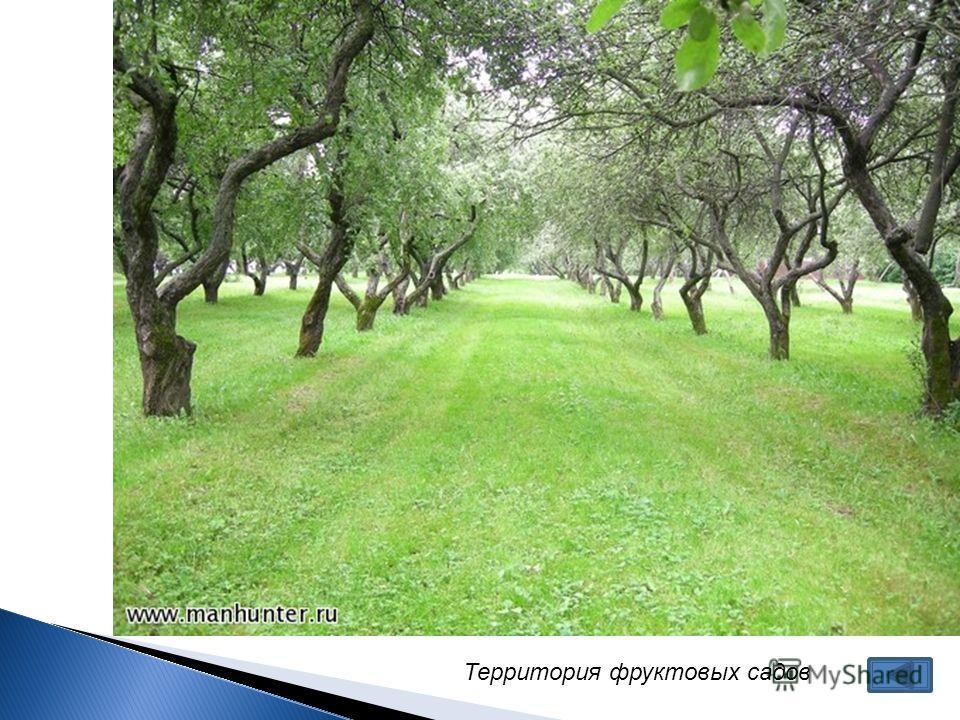 Территория фруктовых садов