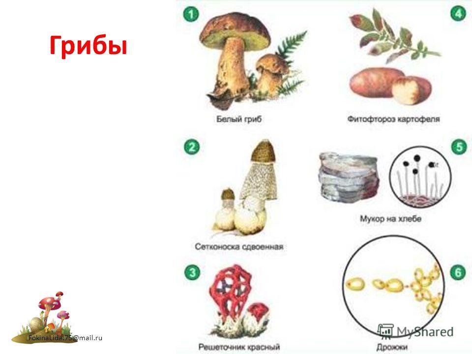 Грибы FokinaLida.75@mail.ru