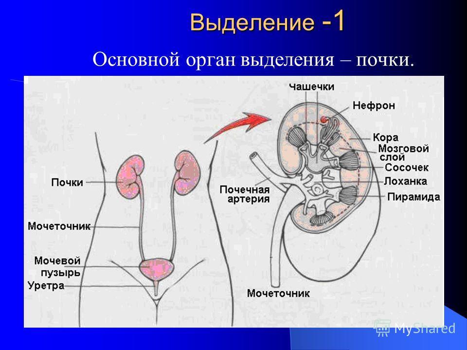 Уретероэнтеростомия фото