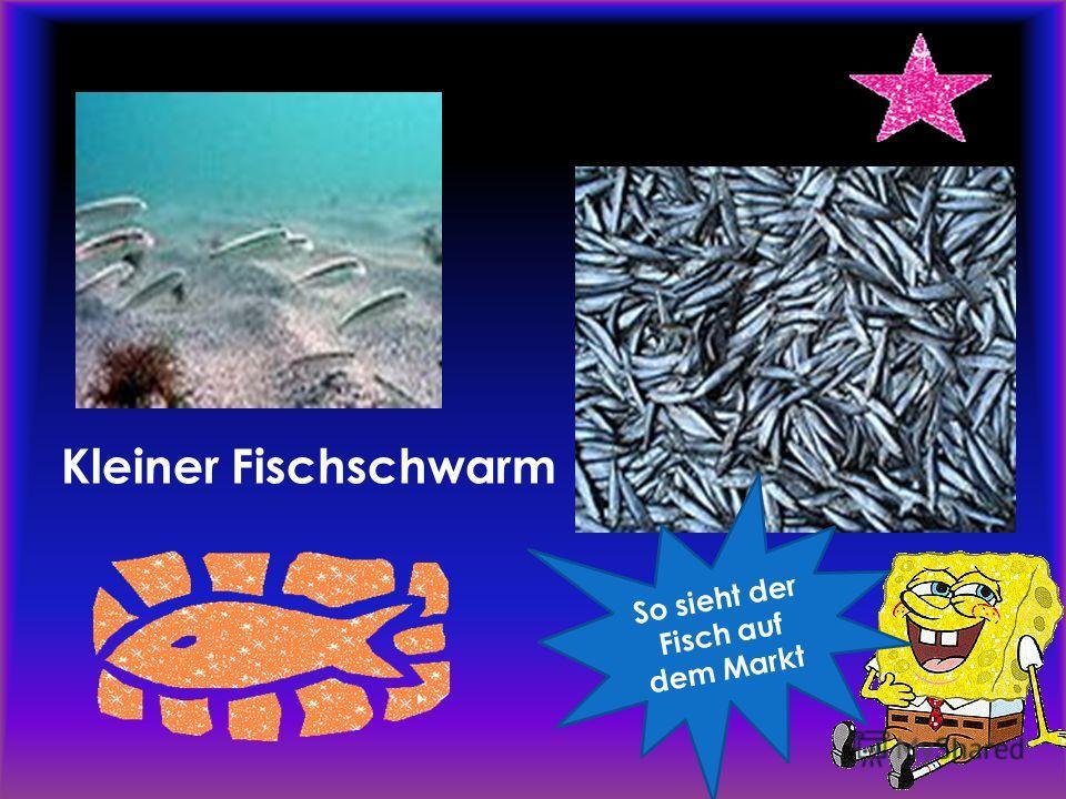 Kleiner Fischschwarm S o s i e h t d e r F i s c h a u f d e m M a r k t