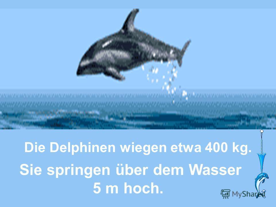 Sie springen über dem Wasser 5 m hoch. Die Delphinen wiegen etwa 400 kg.