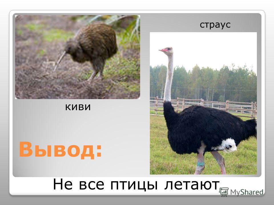 Вывод: Не все птицы летают киви страус