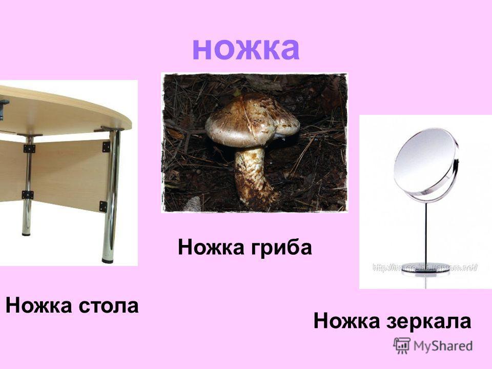 ножка Ножка зеркала Ножка стола Ножка гриба