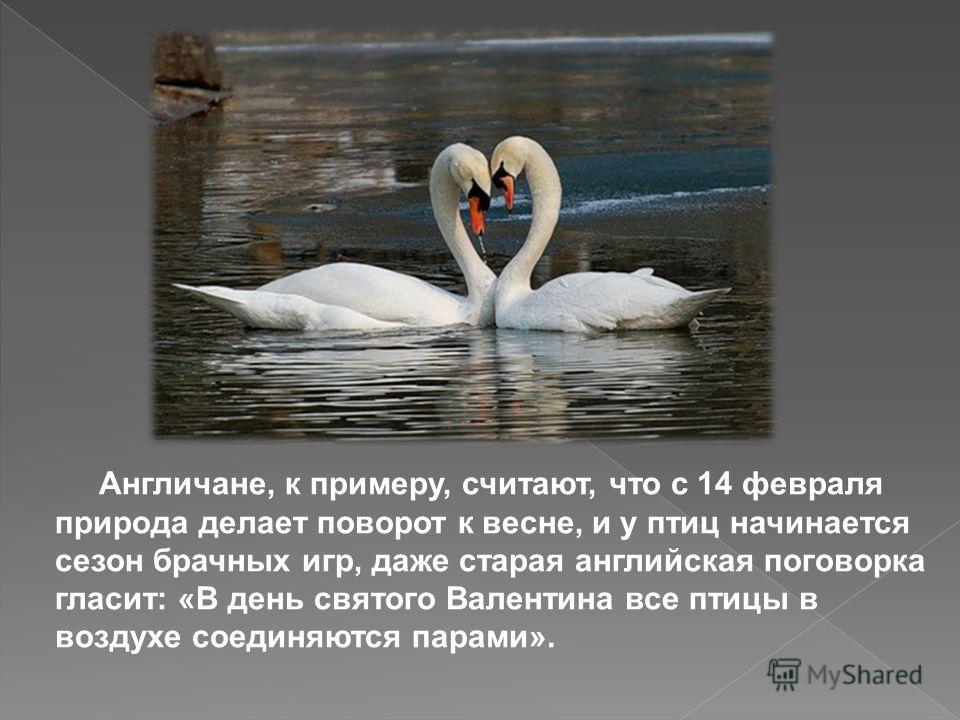 Англичане, к примеру, считают, что с 14 февраля природа делает поворот к весне, и у птиц начинается сезон брачных игр, даже старая английская поговорка гласит: «В день святого Валентина все птицы в воздухе соединяются парами».