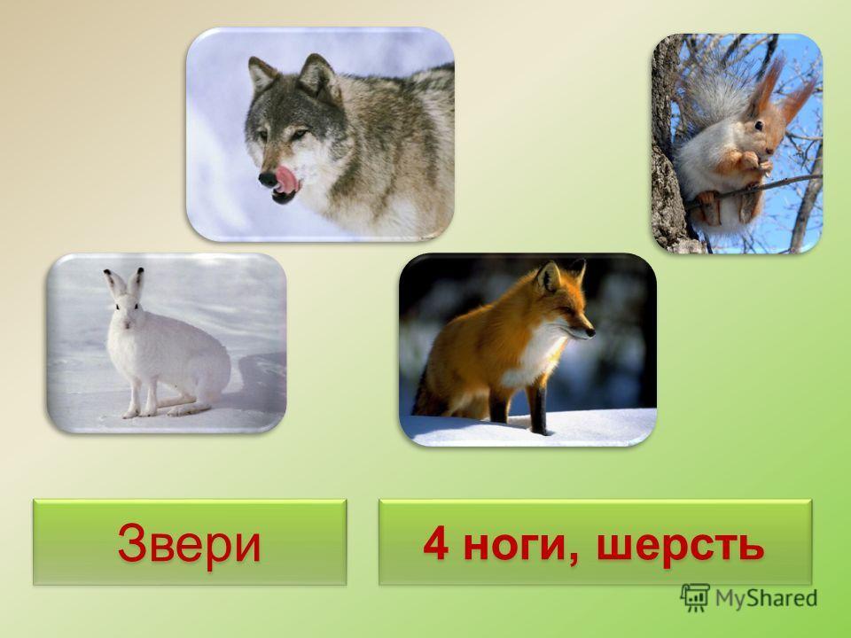 Тема Какие бывают животные? Как можно разделить на группы? Чем группы отличаются друг от друга? Кто в какую группу относится?